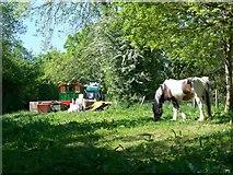 SU4356 : Travellers' camp near Crux Easton by Maigheach-gheal