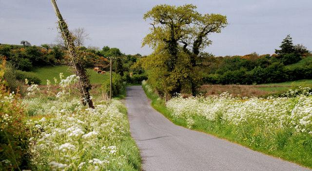 The Lisbane Road near Saintfield (2)