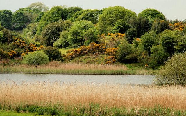 Lisbane Lough near Saintfield