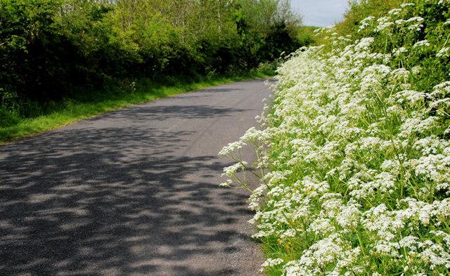 The Bressagh Road near Boardmills (2)