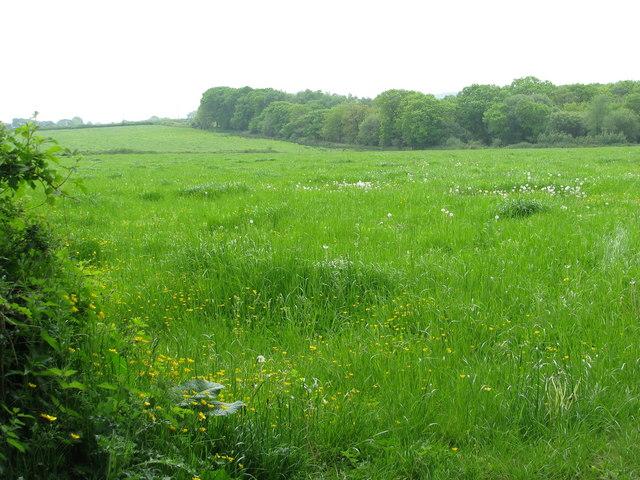 Field by Dolton Beacon