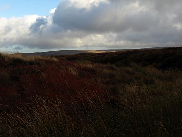 Moorland near Ousby Fell