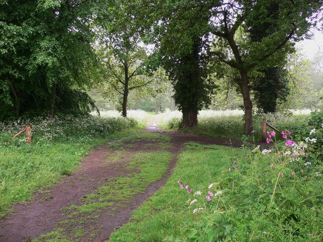 The North Downs Way through Shalford Park