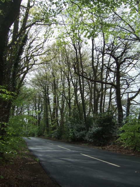 """B3179 passing """"Big Wood"""" on the left"""