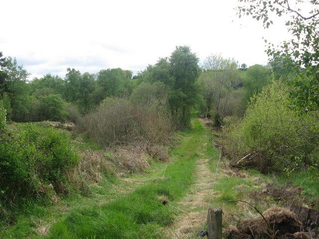 Farm track at Kilnacreevy, Co. Cavan