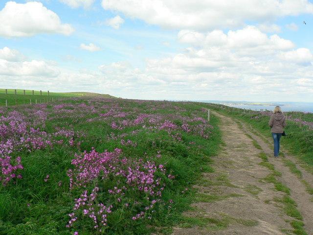 Headland Way, Bempton Cliffs