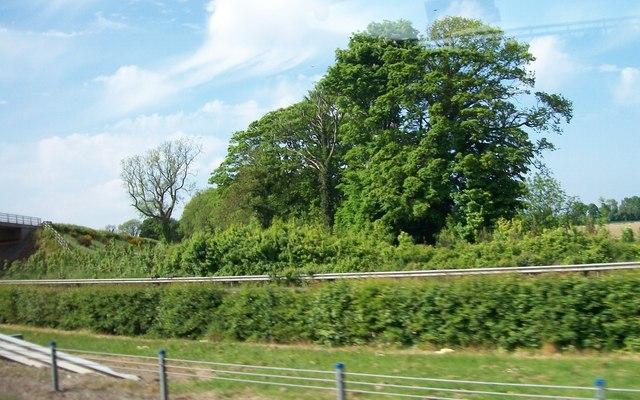 Trees alongside the M1 west of Dardistown