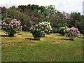 TQ2907 : Lilacs in Withdean Park 2011 by Paul Gillett