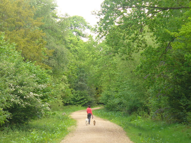 Recreation in Alice Holt Forest