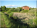 SO8652 : Wetland in St Peter's by Philip Halling