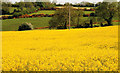 J1340 : Rape field near Loughbrickland by Albert Bridge