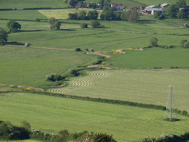 Lines of mown grass by the Lox Yeo