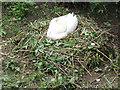 TQ7258 : Swan's nest under Aylesford Bridge by Stephen Craven