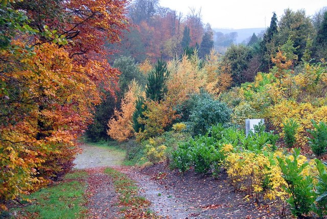 Autumn in Newtownmountkennedy, County Wicklow