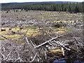NY5789 : Kielder Forest by Andrew Smith