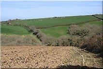 SW7724 : The Valley above Carne by Tony Atkin