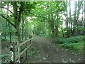 SE5017 : Track through Brockadale Plantation by Christine Johnstone