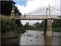 SO5139 : Birds under the Bridge by David Roberts