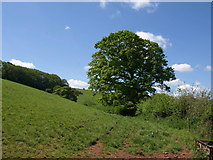 SS7401 : Oak by Appledore Farm by Derek Harper