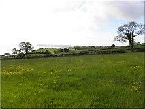 D3510 : Saintown, Co Antrim by Kenneth  Allen