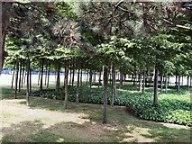 TQ3979 : Park near O2 arena by Paul Gillett