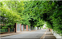 J3372 : Windsor Avenue, Belfast by Albert Bridge