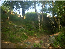 SE2065 : Shade of trees and Millstone Grit - Brimham Rocks by Tom Howard