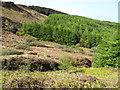 NR7118 : Forest on Beinn Ghulean by David Hawgood