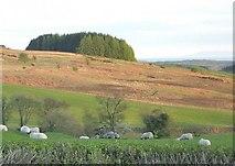 NX6060 : Laghead fields by Ann Cook