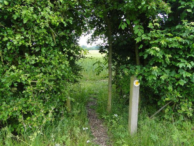 Footpath through the hedge