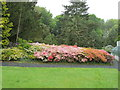 NR6447 : Azaleas in Achamore Gardens by David Hawgood