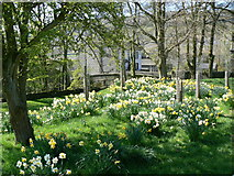 SD9772 : Kettlewell in Spring by Don Barber