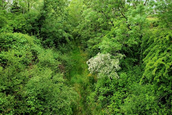 Old railway near Crossgar (1)