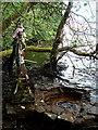 H0773 : St Brigid's Well: Loch Dearg by louise price