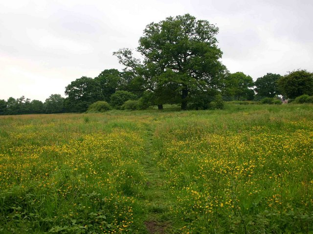 Meadow north of Bickenhill Road, Marston Green