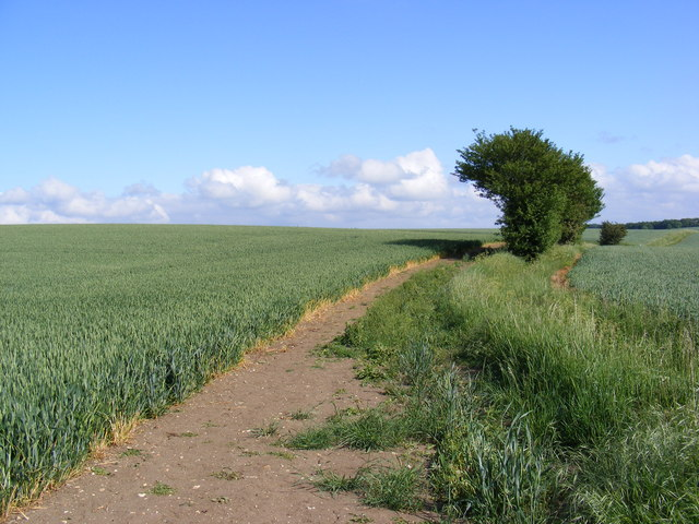 Wheat Crop at Moat Farm