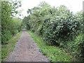 SU8673 : Warfield: Hazelwood Lane by Nigel Cox
