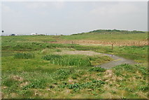 TA1281 : Pond, Filey Brigg by N Chadwick