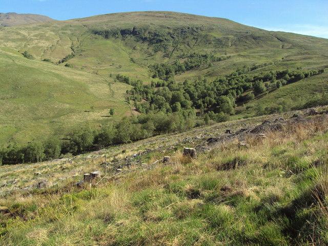 Lower slopes of Ben Lomond