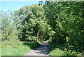 NZ9403 : The old railway line: northwards by N Chadwick