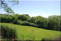 NZ9403 : Woodland along Mill Beck by N Chadwick