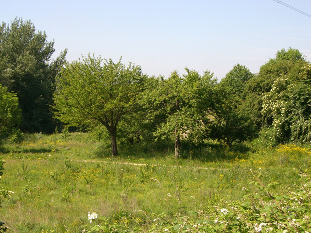 Mersey Vale Nature Park, Orchard