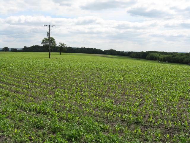 Fields adjoining Bagmere Lane