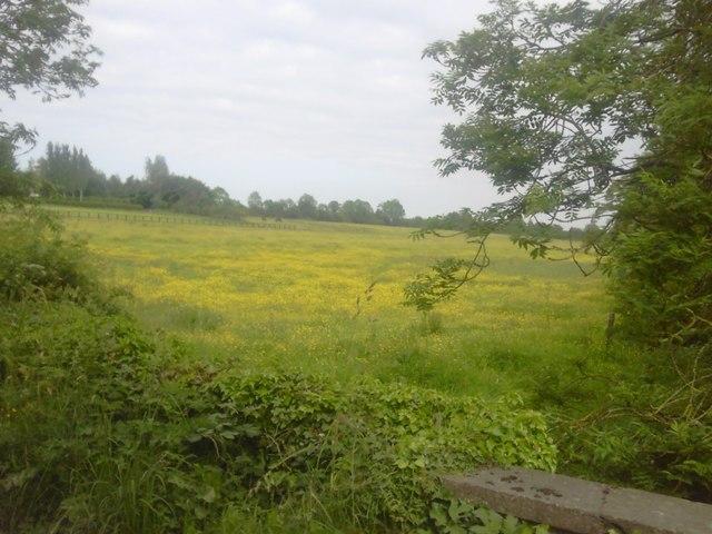 Buttercup Pasture, Co Meath