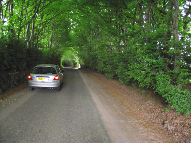 Fine example of a Brendon Hills 'hedge tunnel'