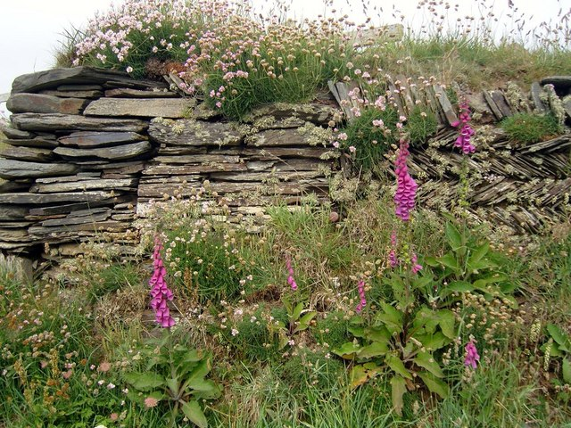 Cornish hedge