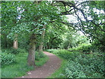 SP2778 : The edge of Tilehill Wood by E Gammie