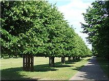 TQ1469 : Bushy Park, Hampton by Malc McDonald