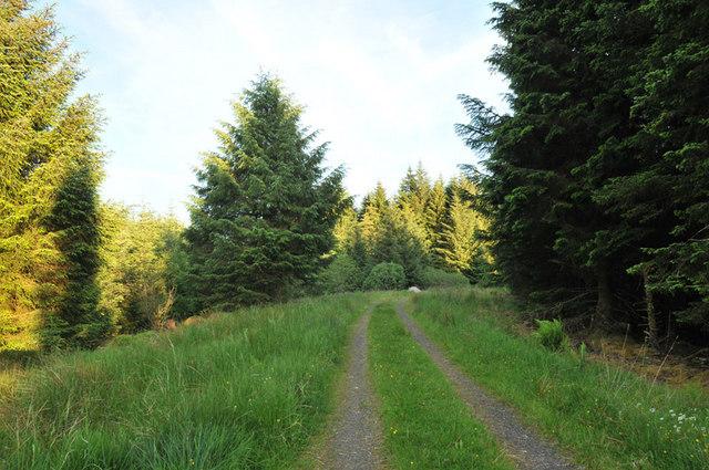Grassy forestry road near Barcaldine