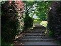 NR8687 : Steps to Kilmory Road by Patrick Mackie